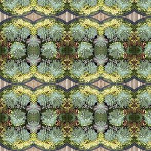 Sage Succulents 5647