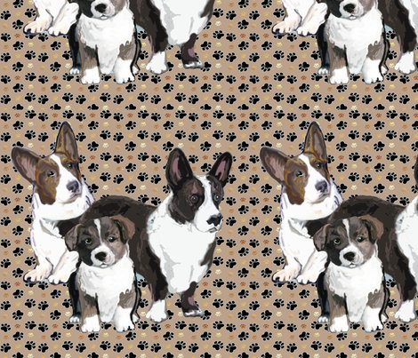 2214936_r2214936_rcardigan_corgi_puppy_and_adult34-12_shop_preview