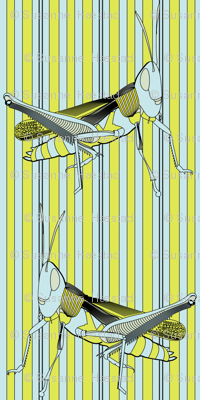 grasshopper on stripes