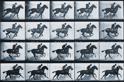 E.M.'s Horse in Motion: FIlm Fabric from Early Cinema