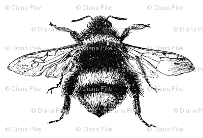 Vintage Bumble Bee