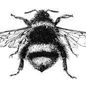 Rrrrrfree-stock-image-bumblebee-graphicsfairy_shop_thumb