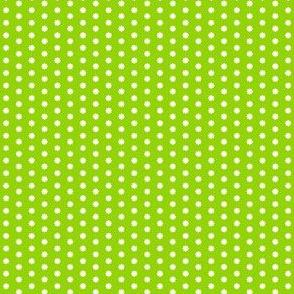 Citrus Lime Surprise