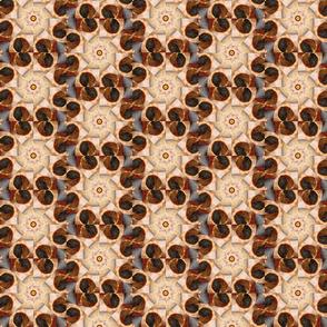 shell kaleidoscope cropped