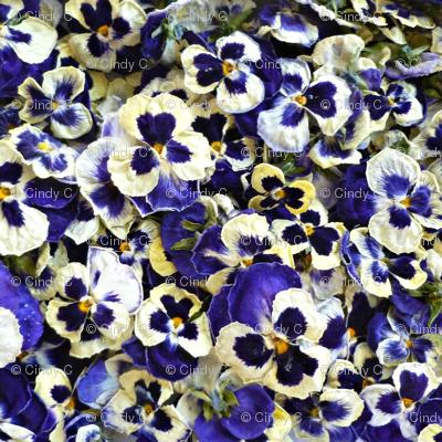 Purple Pansy Confetti