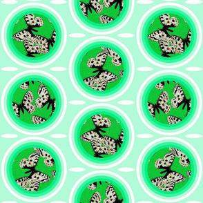 C4 - Parnassius apollo