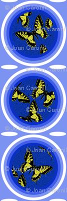 C9 - Papilio machaon