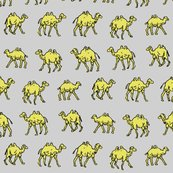 Rcamels_on_yellow_grey_1_shop_thumb