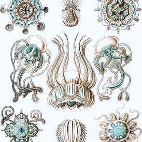 Vintage Sea Creatures, Crisp White and Aqua