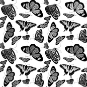 monochrome_butterflies