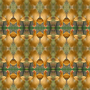 zoom chicken 2