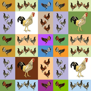 roosters_uneven_yard_A_Ba_D_F