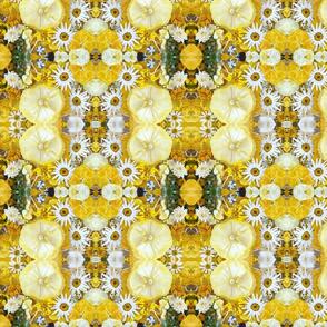 Yellow Daisy Fields