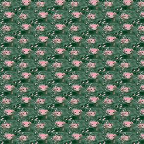 Swimming Pigs Repeat