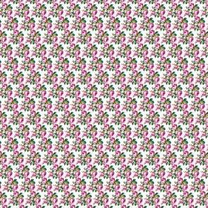 Rambling Rose - pink