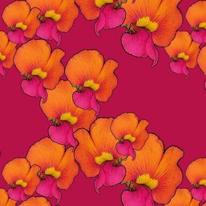 Chorizema cordatum ZigZag b61147
