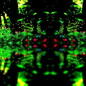 Firefly reflections