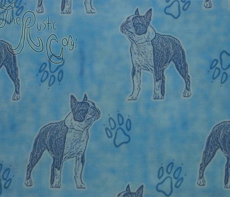 Posing Boston Terriers - blue