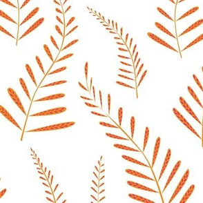 Ferns orange