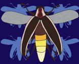 Rrfirefly_on_blue_for_offset_thumb