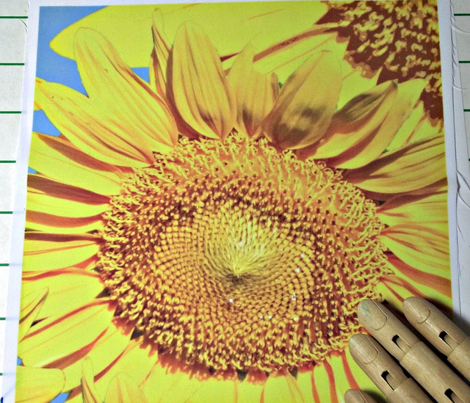 Sunflowers_multiple_on_blue_yard_comment_357117_preview