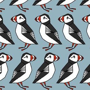 puffins // puffin birds birds
