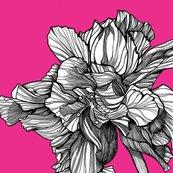 Hibiscusline_pillowfabric_fuschia_shop_thumb