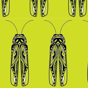 firefly sketch
