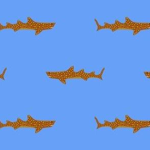 Jaugar shark