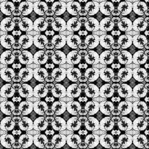 Black and White Begonia 5602