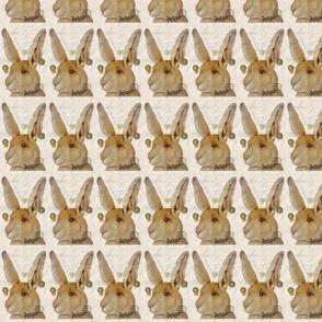 Classical Bunny