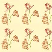Tulips: Three Graces