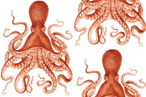Octopus Oasis in Coral  fabric by willowlanetextiles on Spoonflower - custom fabric