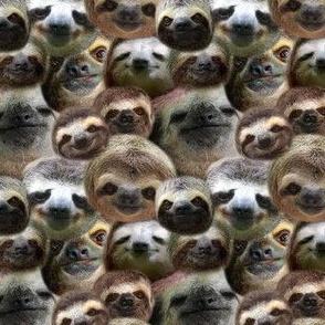 sloths & more sloths
