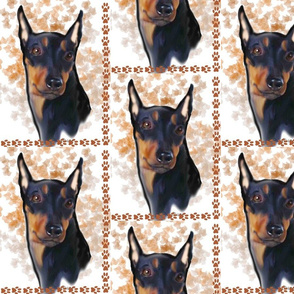 german_pinscher_portrait