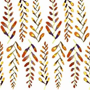 Manx Flora - Wild Crocosmia