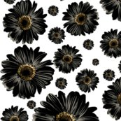 Pop-daisy-black_repeat_shop_thumb