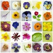 Rr2309839_rrrrrflower_collage_singles_shop_thumb