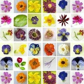 Cindy's Dried Flowers