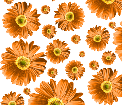 Orange Daisies fabric by ophelia on Spoonflower - custom fabric