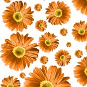Pop-daisy-orange_repeat_shop_thumb