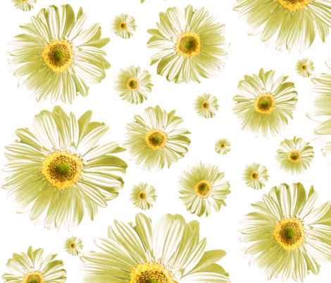 Daisies fabric by ophelia on Spoonflower - custom fabric