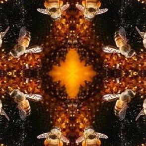 Holly's Honeybees
