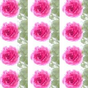 Pink Rose Basic  Line up