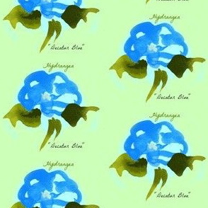 Hydrangeas on key lime