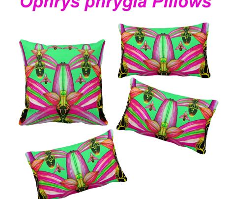 O.Phrygia