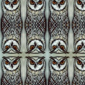 potter owl