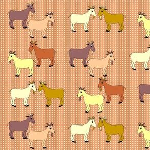 Devon_Meadows_Sunshine_and_Rain_Goats