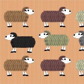 Devon_Meadows_Sheep_Sunshine_and_Rain