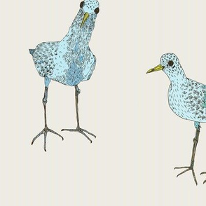 two blue birds, large